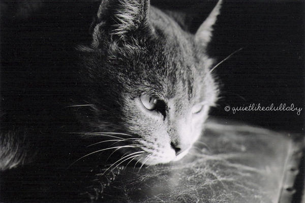 Le Chat by Chimaerica