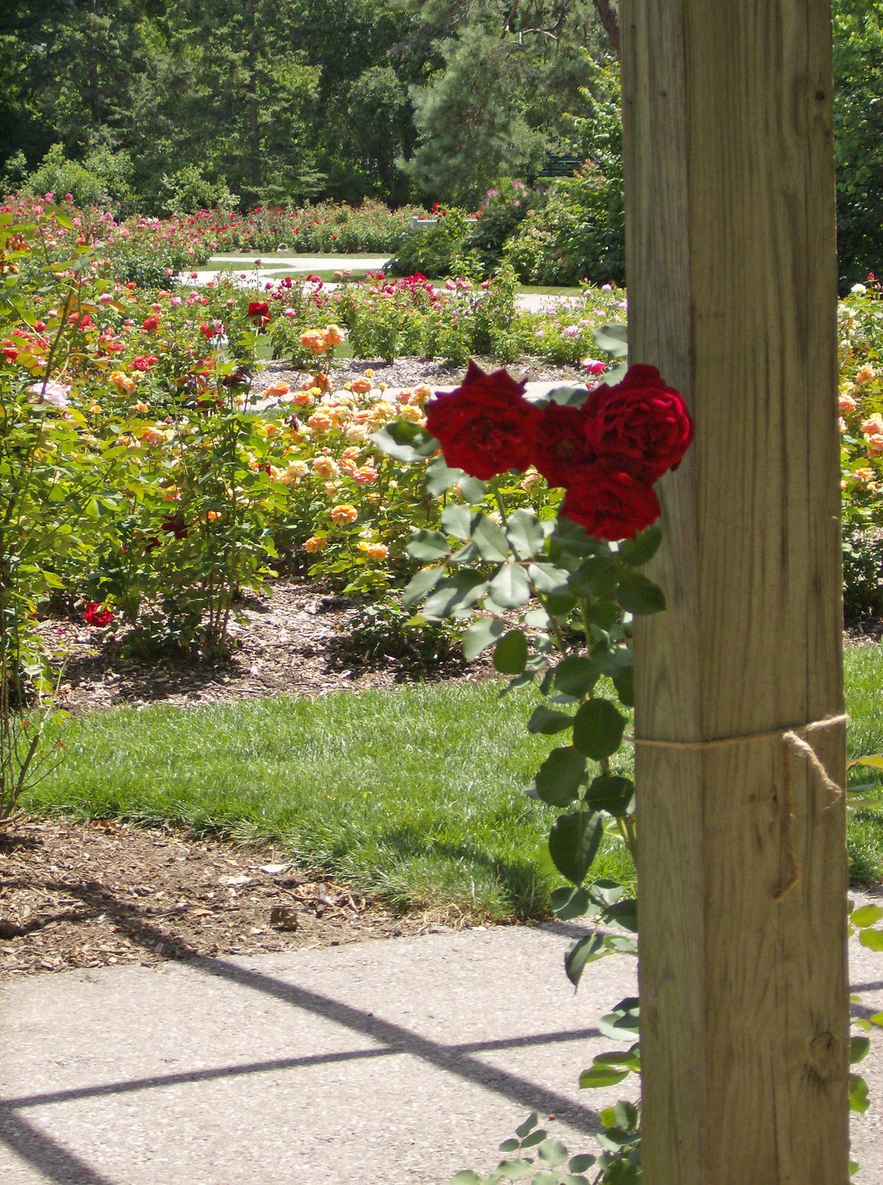 Rose Garden Frame 1 by OsorrisStock