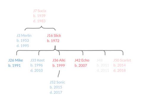 J7's Family Tree