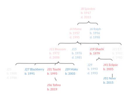 J8 Family Tree