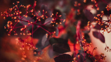 Abstract Flowers 1920x1080 Free Download by randeeGALAXIES