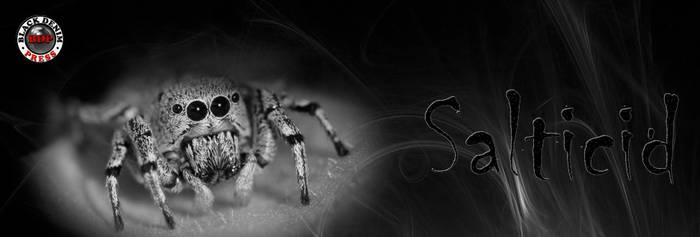 Salticid, Scifi Short Story on Wattpad in 30 part by BlackDenimLit