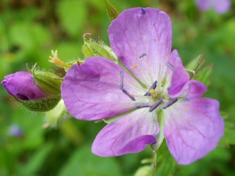 A.T. Flower
