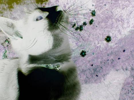 Solar Cat Two