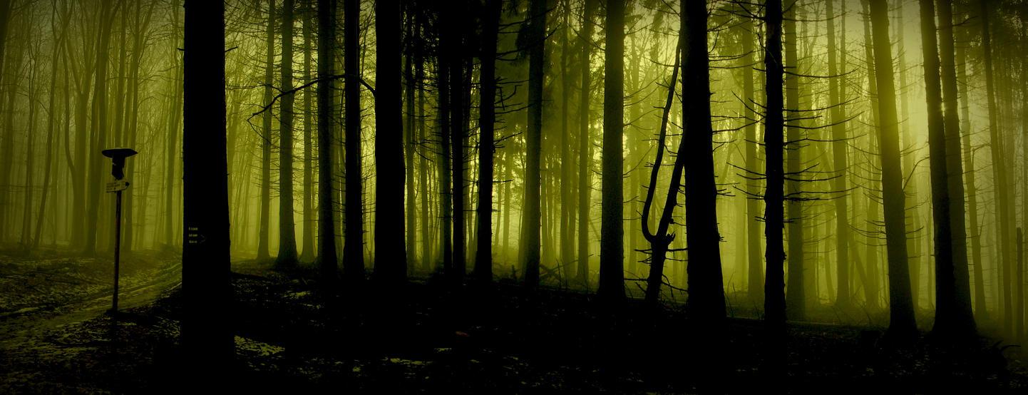 deep wood by cy4n