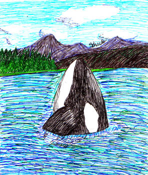 Wild Orca - by Schulo