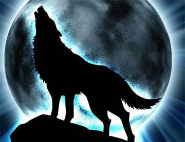 wolf by lonewolf1234
