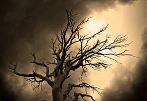 Old Tree by oinsain