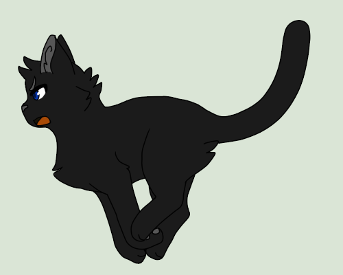 Crowfeather by RoxyPuppyGirl