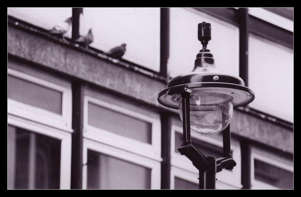 Berwick St by ash