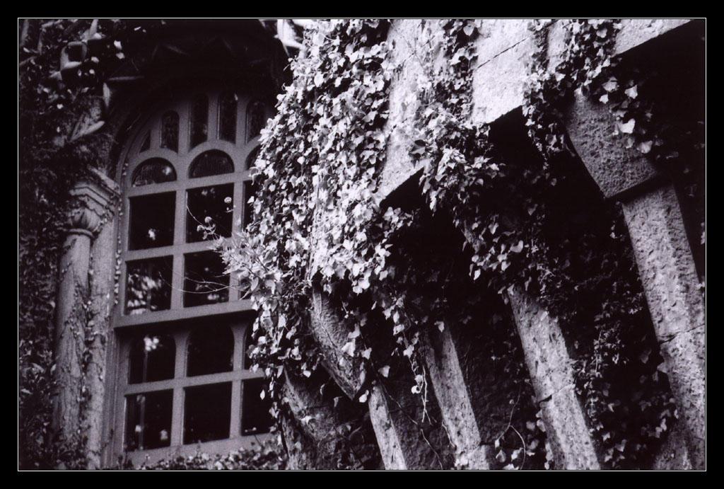 Penrhyn Castle by ash
