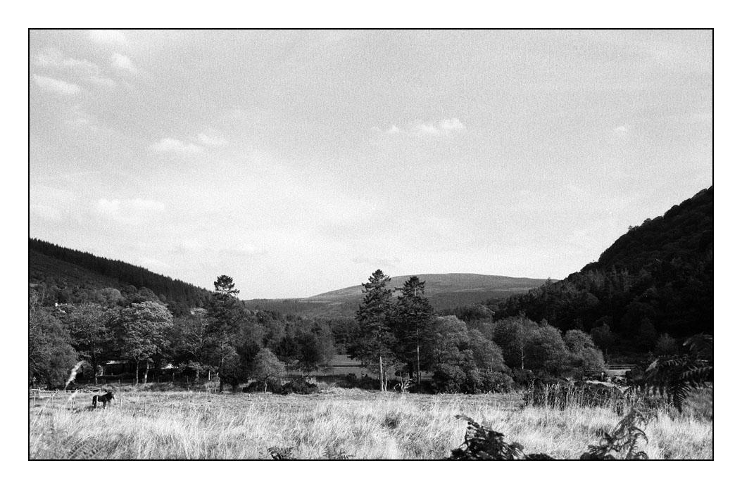 Horse at Glendalough by ash
