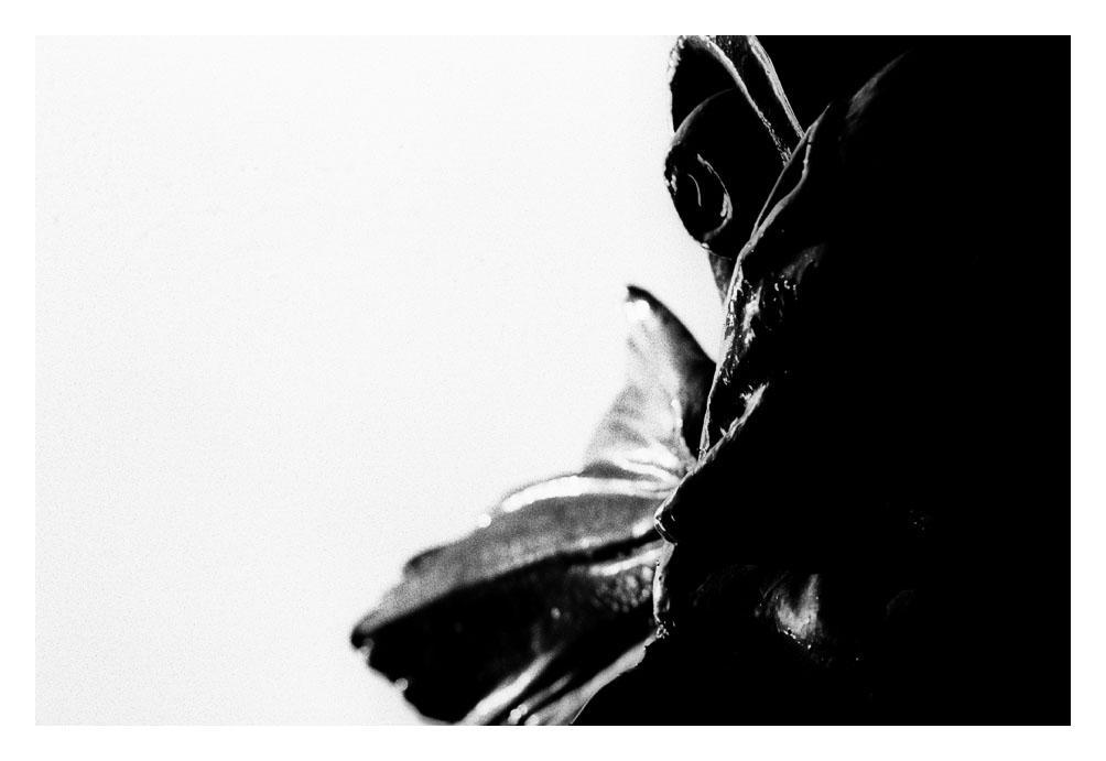 Metal Fish by ash