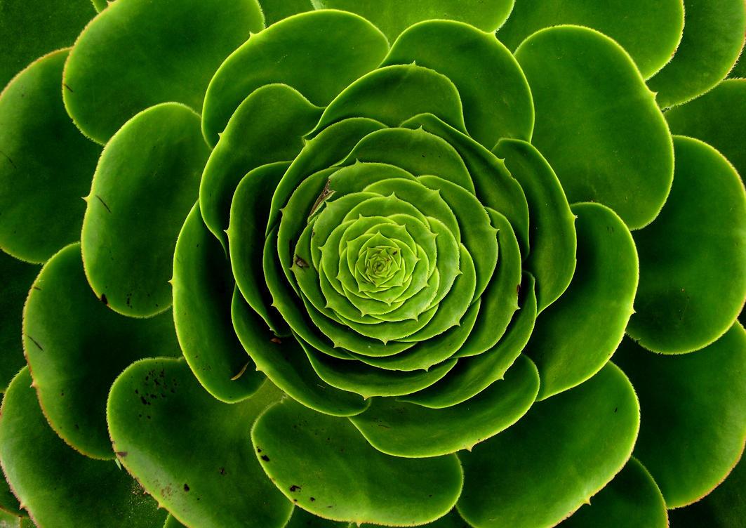 Big leafy spiral green plant by squirrelgirl111 on deviantart - Leafy houseplants ...
