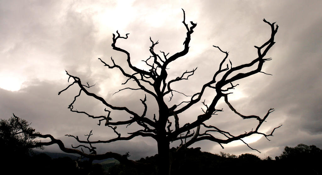 Dark Tree by SquirrelGirl111 on DeviantArt
