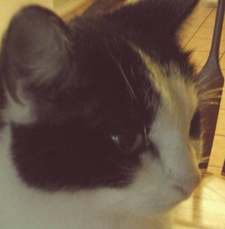 My cat by GodOfGruesome007