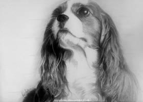 Cute Dog by rupshree