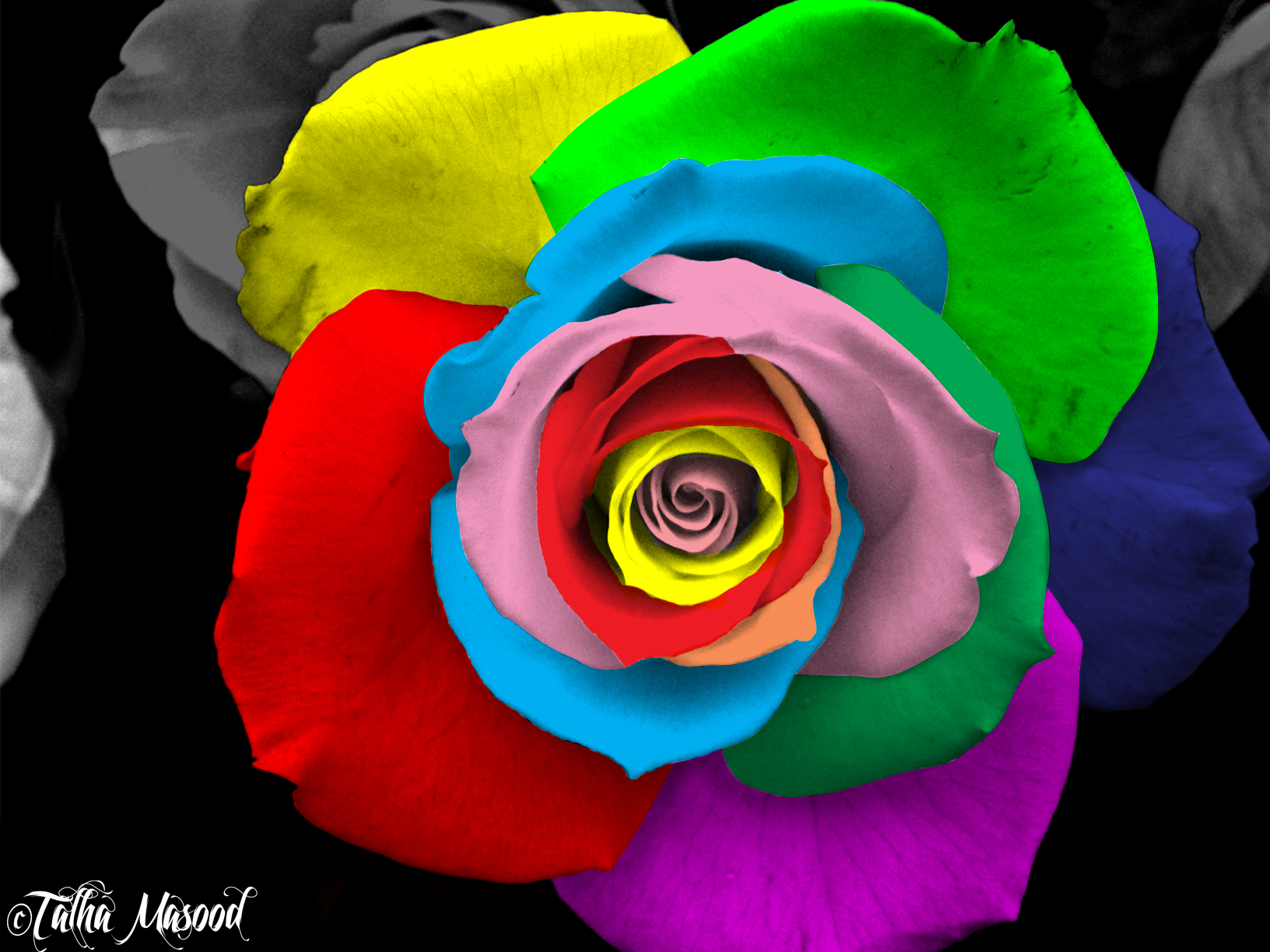 Colorful rose by supercooltalha on deviantart for Colorful roses images