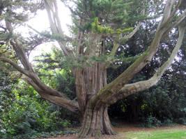 Tree by Hagalaz13