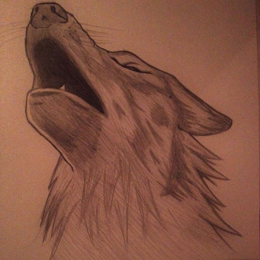 Wolf howling. by forrealsyall