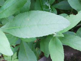 Leaves - green by clarksie112