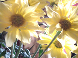 Yellow flowers by clarksie112