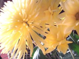 Yellow flowers 2 by clarksie112