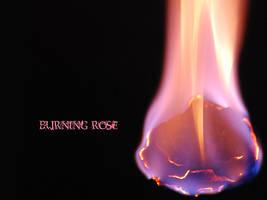 burning rose by anuminis