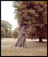 Tree by anuminis