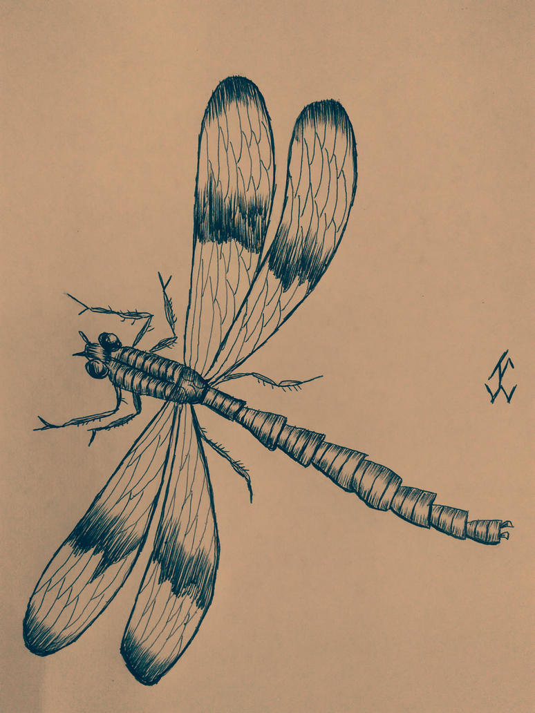 AnimalsDragonfly by jcreduro