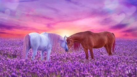 Equine Love Wallpaper 2560x1440