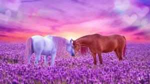 Equine Love Wallpaper 2560x1440 by Amanda-Kulp