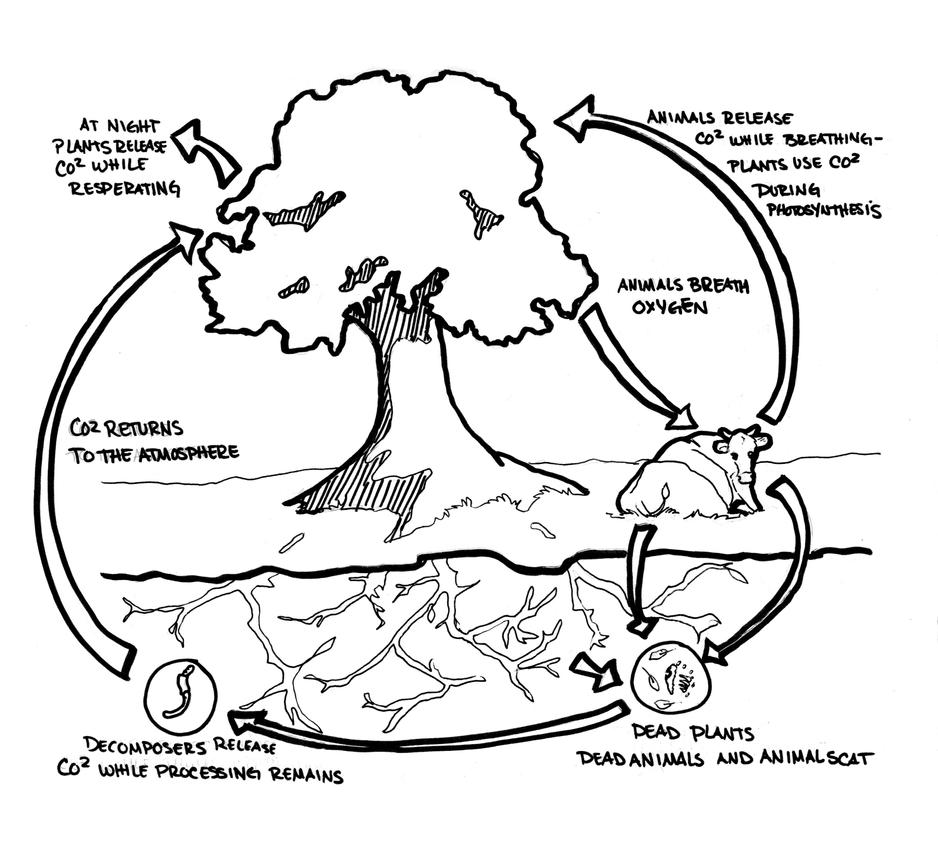 The carbon cycle by izzycreates on deviantart the carbon cycle by izzycreates ccuart Gallery
