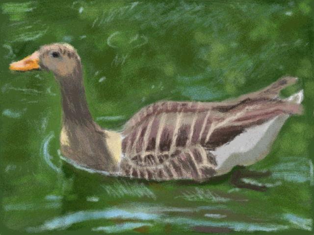 Art Academy DSi: Goose by jennytablina