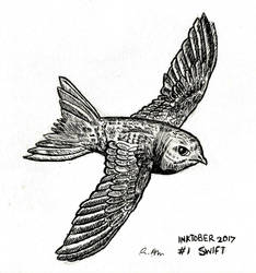 Inktober 17 - Swift by ChibiBeckyG