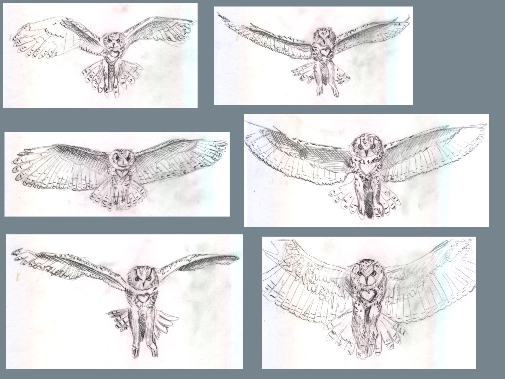 Flying owl - Frame by frame animation (44) by Hedwigs-art on DeviantArt