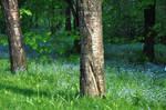 Stock- Between trees