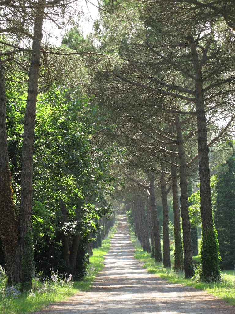 Ataturk Arboretum 3 by emrefirat on DeviantArt
