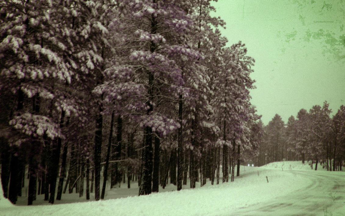 Dark Winter Woods Wallpaper By DaNoTomorrow