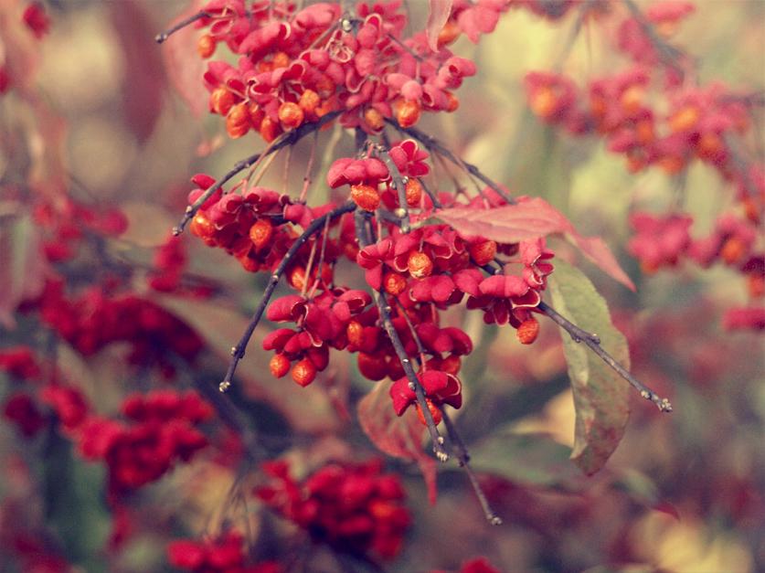 Autumn Dream by Zyuza
