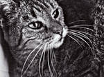 my cat in black and white