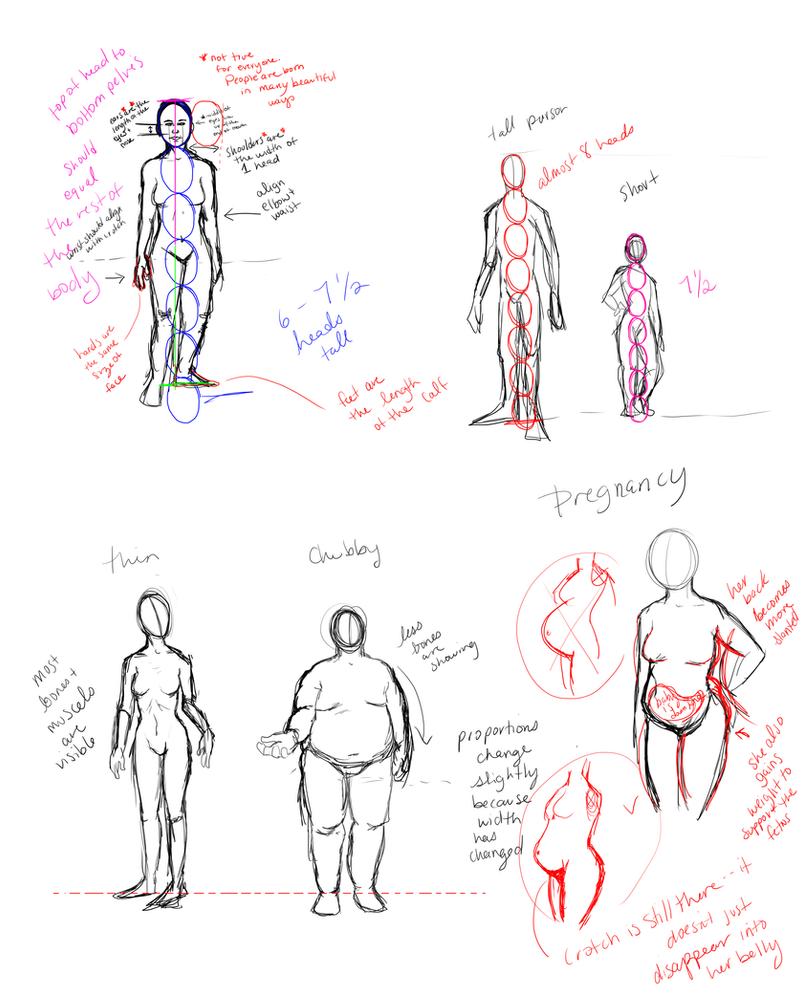 Anatomy Crash Course By Candicindy On Deviantart