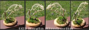 Mellers Chameleon Skeleton