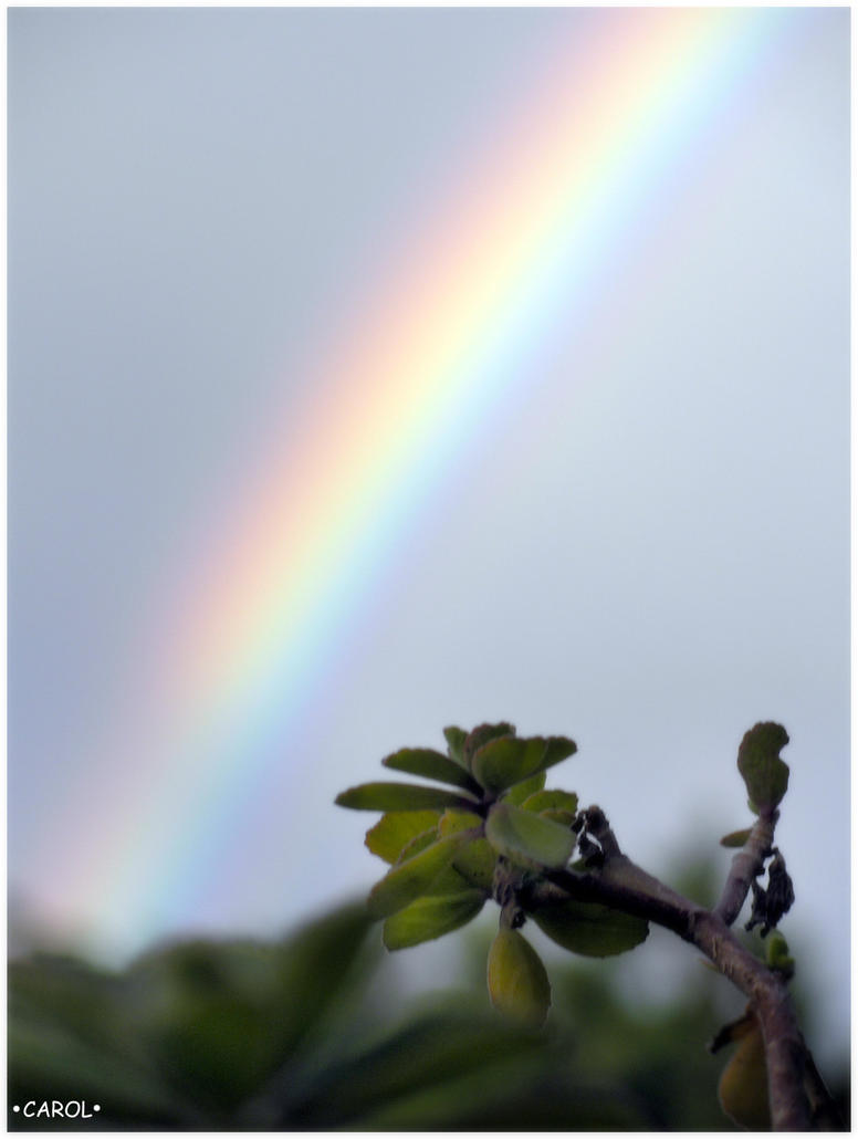 Lucky day by rainbow colors club on deviantart - Lucky color of the day ...