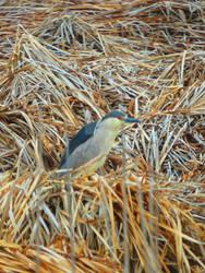 Unknown Bird 13