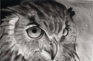 Owl upload by Jbergas