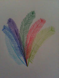 Feathers by malimoo