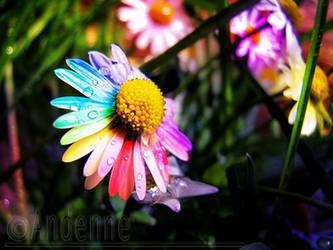 Barvy leta by Andenne