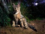 Midnight Kitty