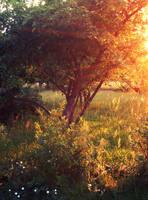 Garden by Reni89